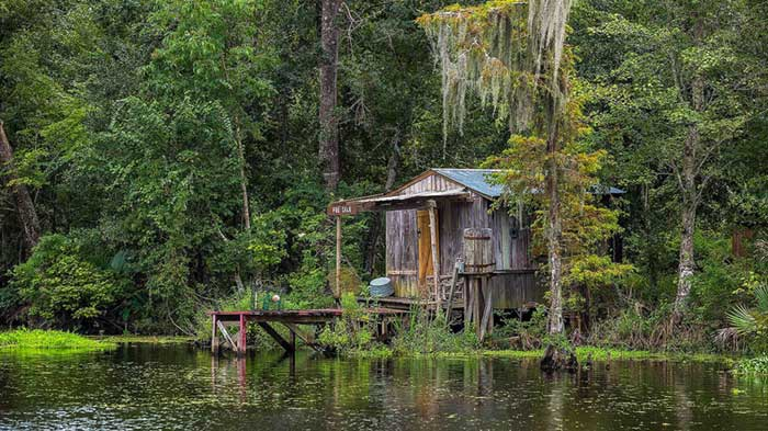 Swamp Tours New Orleans Cajun Encounters